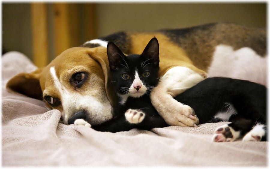 Собака и кошка спят вместе