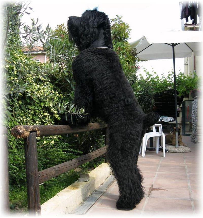 Большая порода собак