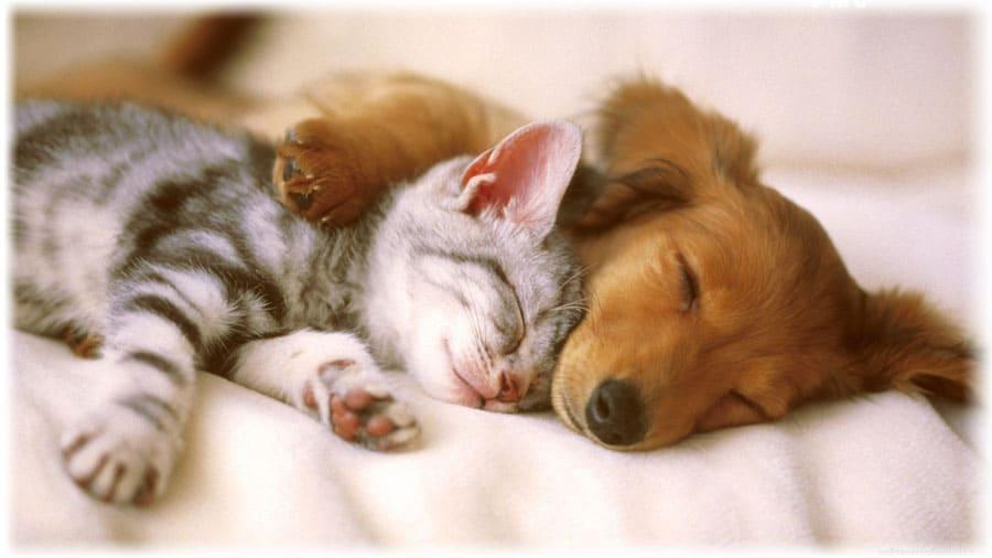 Что делает собака во сне