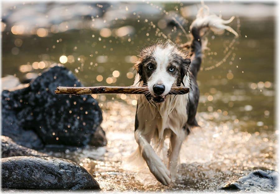 Мокрая бегущая по воде собака во сне