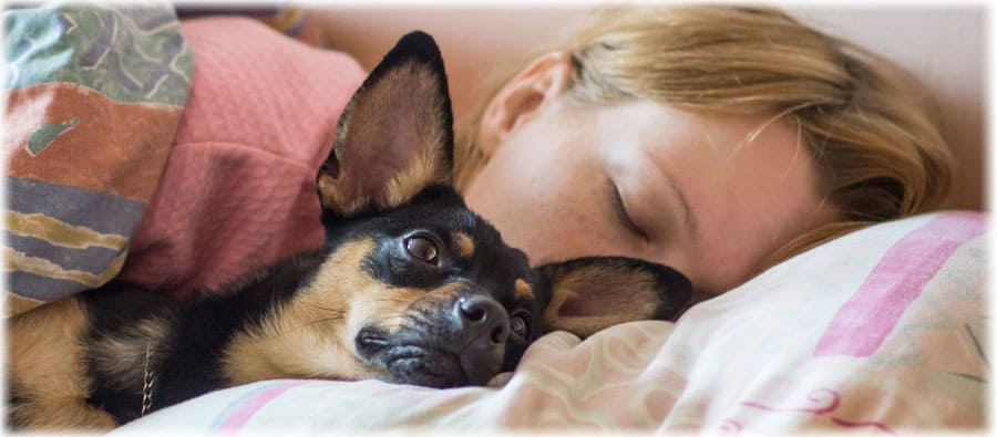 К чему снится собака женщине