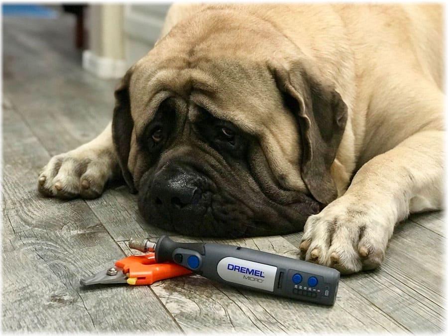 Собака лежит возле когтерезки