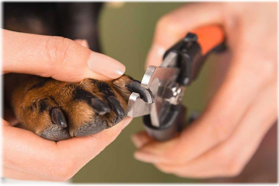 Процесс обрезания когтя