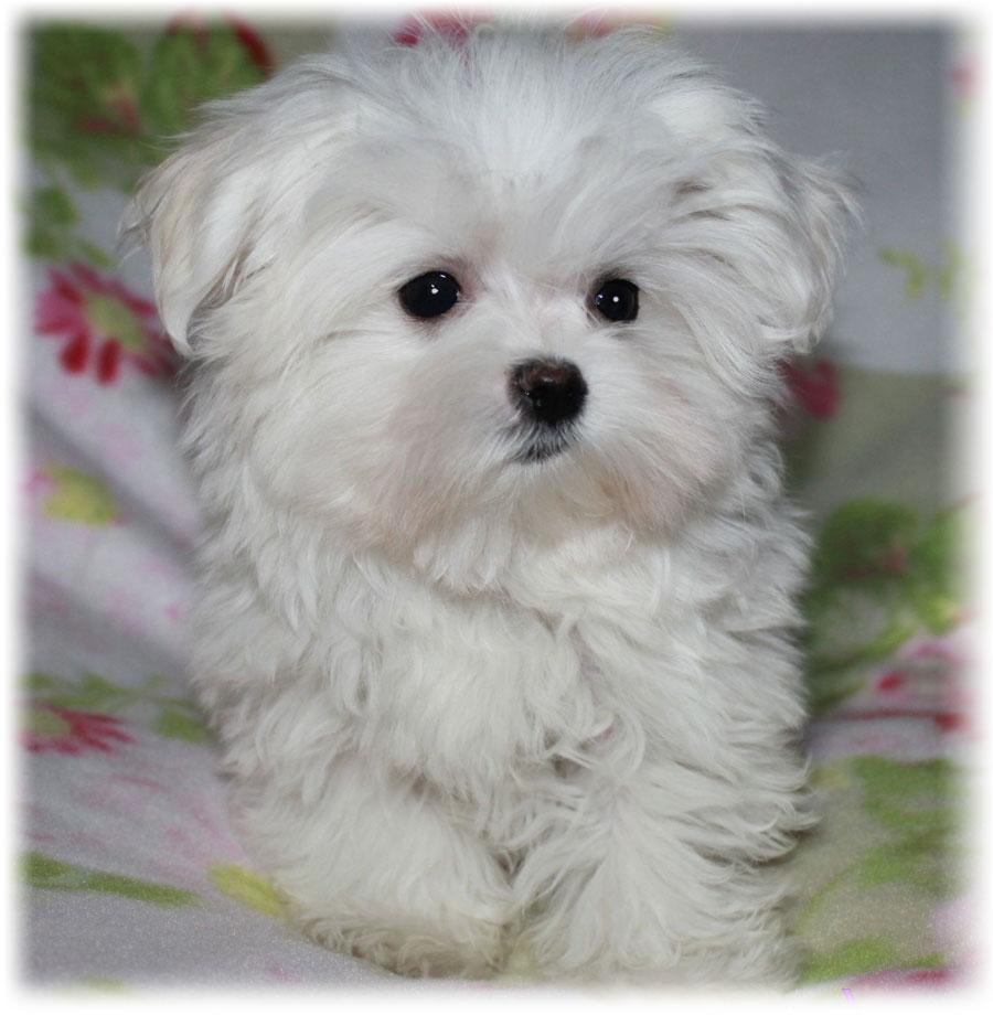 Маленькая собачка на кровате
