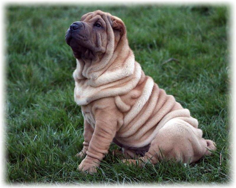 Собака сидит на траве и задумчиво смотрит