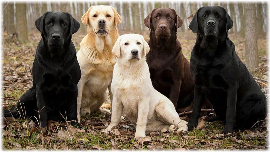 служебные породы собак фото