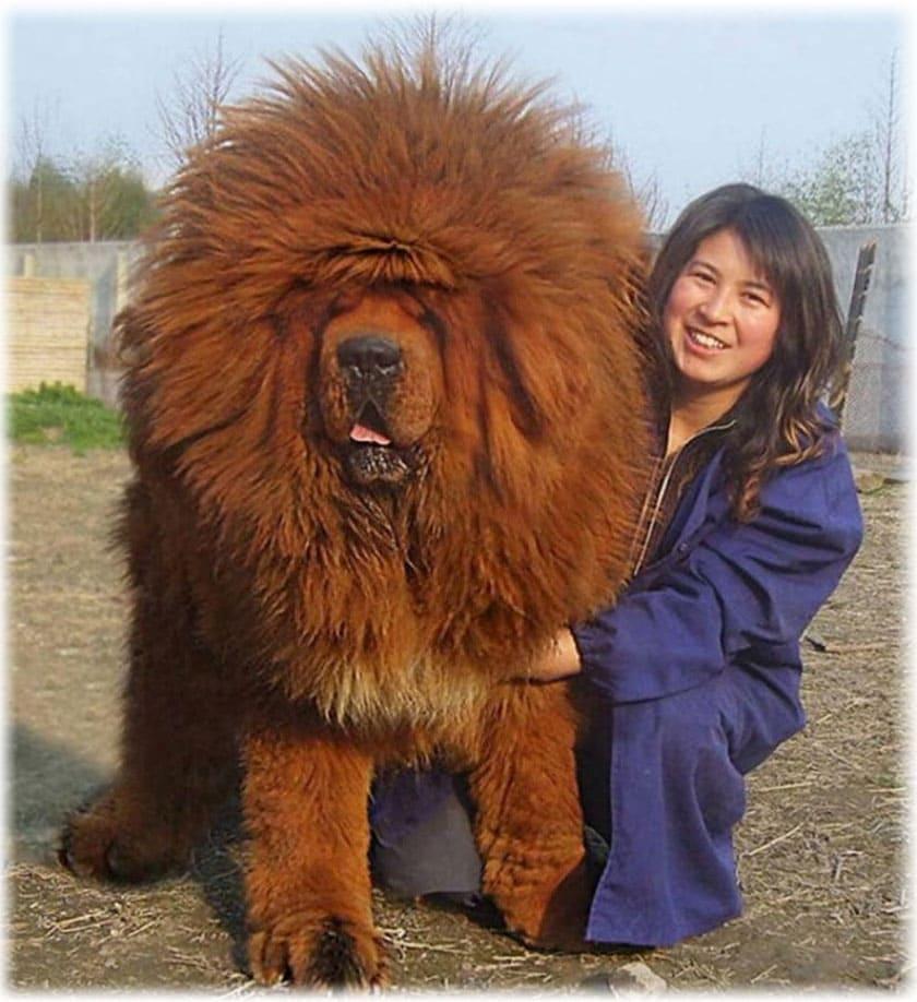 фото тибетский