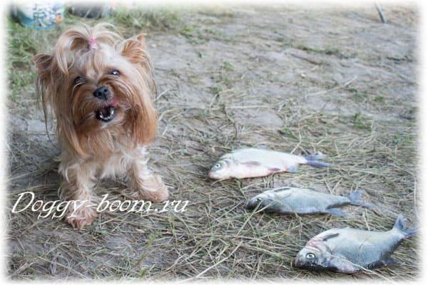 Маленькая собака на рыбалке